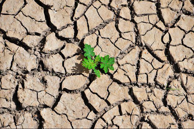 Une plante parvient à se frayer un chemin entre les fissures de la terre croutée par la sécheresse à Los Laureles, Honduras.