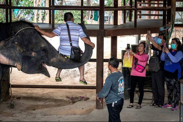 Un éléphant porte un touriste.