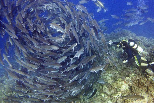 Banc de poissons en Malaisie