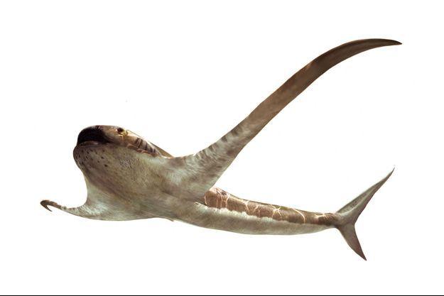 """Le spécimen, Aquilolamna (requin-aigle) milarcae, âgé de 93 millions d'années, a été découvert dans un """"gisement à conservation exceptionnelle"""" du nord-est du Mexique."""