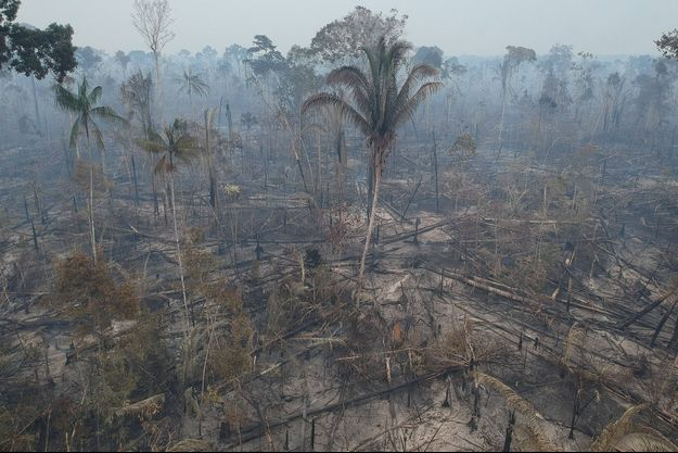 Les ravages de la déforestation au Brésil.
