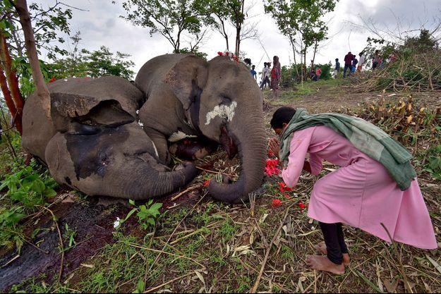 Une femme prie aux côtés d'éléphants, le 14 mai 2021, à Kundoli en Inde.