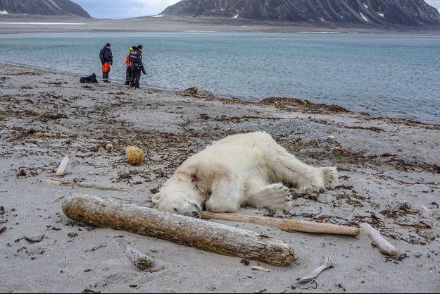 Un ours mort sur l'archipel norvégien du Svalbard.