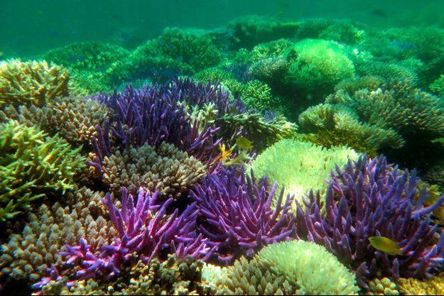 Illustration de coraux.