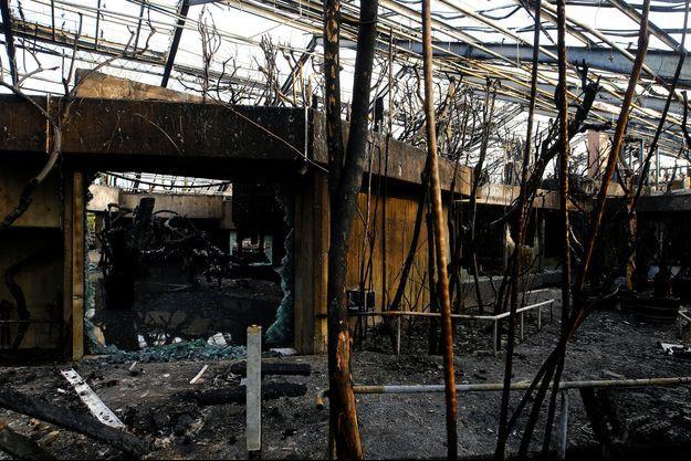 La Maison des singes du zoo de Krefeld, en Allemagne, après l'incendie qui a ravagé l'endroit dans la nuit de mardi à mercredi.