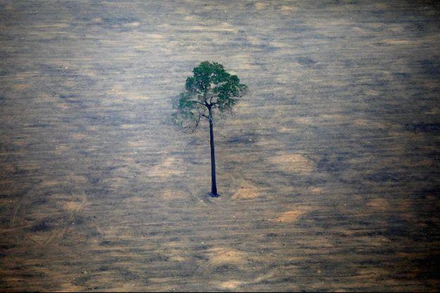 L'écocide, comme en Amazonie ci-dessus, pourrait être passible de vingt ans de réclusion et de 10 millions d'euros d'amende.