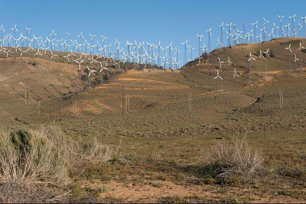 Un champ d'éoliennes aux Etats-Unis.