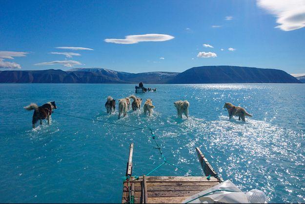 Chiens de traîneau progressant péniblement dans un fjord dont la banquise au Groenland.