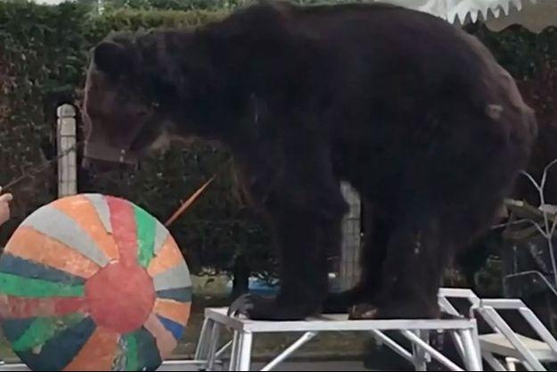 L'ours Mischa sur une vidéo postée sur YouTube.
