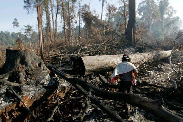 Une forêt détruite pour y planter des palmiers à huile en Indonésie.