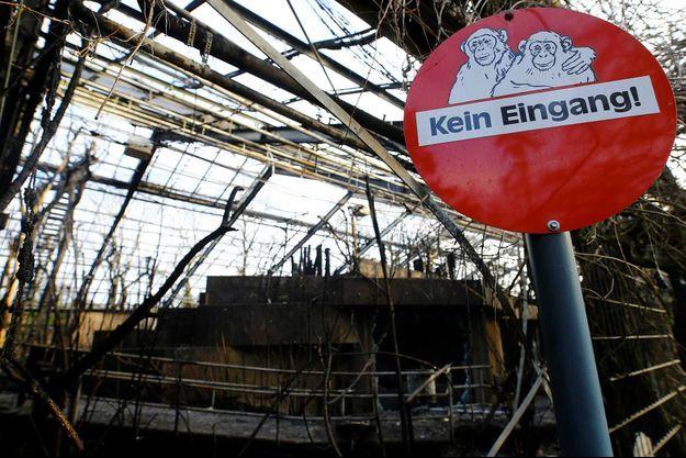 L'incendie a tué plusieurs dizaines de singes au zoo de Krefeld, en Allemagne.