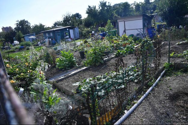 Les jardins ouvriers d'Aubervilliers.