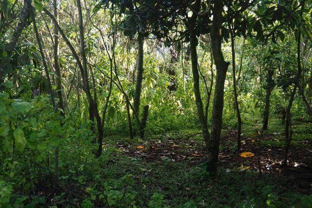 A trois heures de Nairobi, une forêt reprend vie, grâce au travail de toute une communauté.