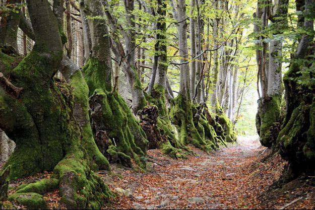 Capable de solidarité et d'intelligence, la forêt tient depuis la rentrée le haut de l'affiche.