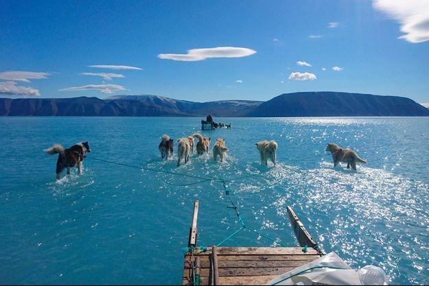 Les chiens de traineau du climatologue Steffen Olsen, les pattes dans l'eau sur le fjord d'Inglefield (Bredning), au nord-ouest du Groenland.