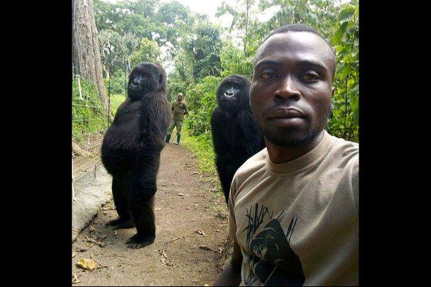 Selfie avec deux gorilles dans le parc des Virunga (République démocratique du Congo).