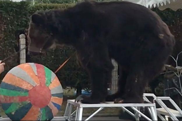 L'ours Mischa sur une vidéo postée sur You Tube