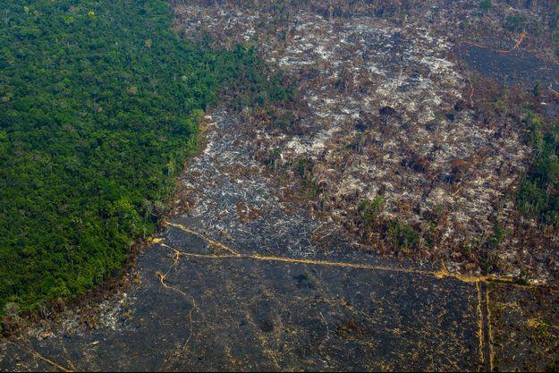Une partie de la forêt amazonienne détruite en juillet dernier.