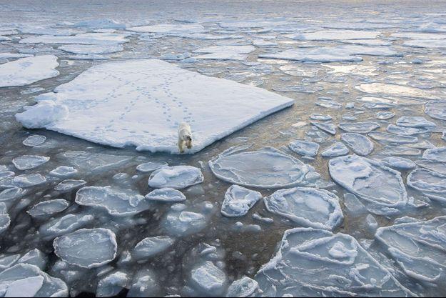 Un ours polaire sur un iceberg, en Norvège.
