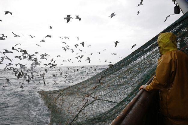 Selon la Commission européenne, 48% des stocks de poissons évalués en Atlantique Nord Est sont actuellement surexploités, un chiffre qui s'élève à 93% en Méditerranée