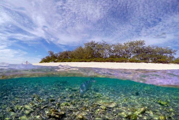 Sur la plage de Lady Elliot Island, les coraux sont morcelés et blancs.