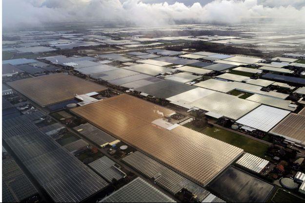 Avec 80% de terres cultivées sous serre, la région de Westland représente la ferme du futur.