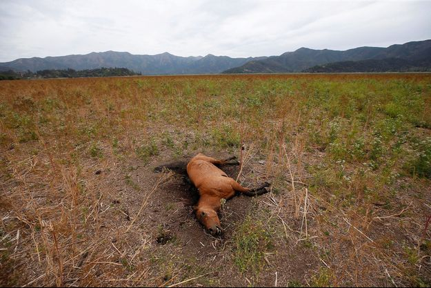 Les restes d'un cheval au Chili.