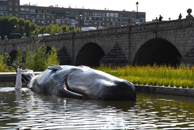 La statue d'un cachalot mort exposée à Madrid.