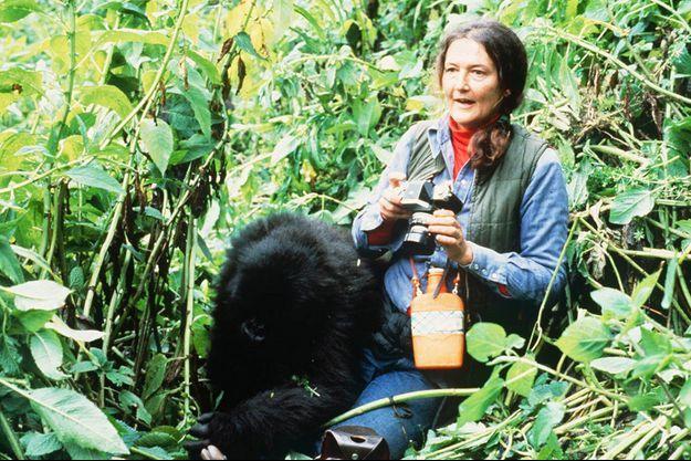 Dian Fossey et un gorille, au Rwanda.