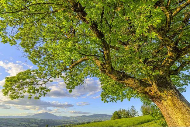 """Les acteurs de la filière bois ont signé jeudi à Nantes un appel à """"renouveler la forêt française""""."""