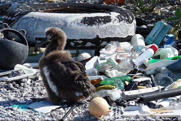 Un oiseau au milieu d'un champ de plastique.