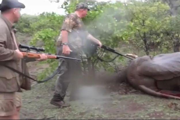 Pascal Olmeta, à gauche, et son guide s'approchent de l'éléphant qui vient d'être abattu.
