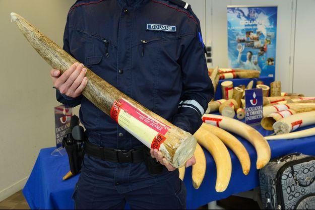 Un officier des douanes française tient en main une défense d'éléphant.
