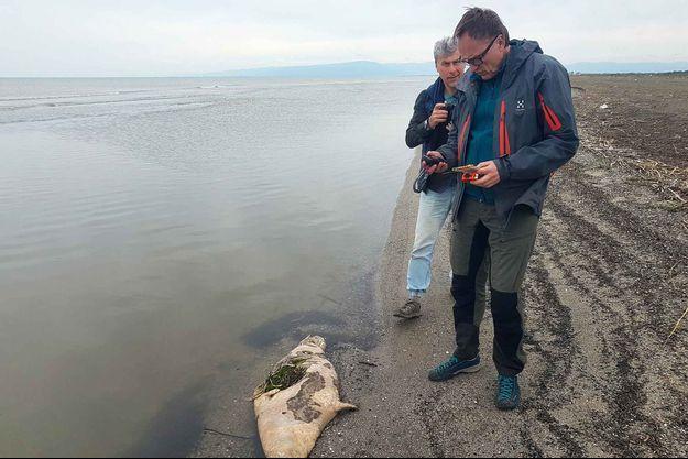 """Un phoque mort devant des membres du centre de recherches """"Mammifères marins"""" de Moscou."""