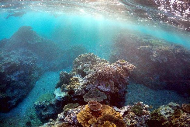 Une vue sous-marine de la grande barrière de corail.
