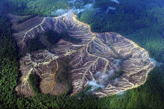 Vue aérienne de montagnes de la province de Jambi à Sumatra, autrefois boisées.