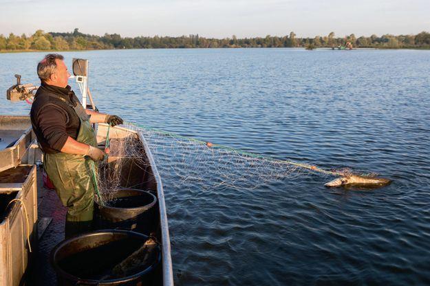 Didier Macé, pêcheur professionnel, s'apprête à affronter la bête. Lui considère que le silure a droit de cité dans nos rivières. Il a beaucoup d'ennemis.