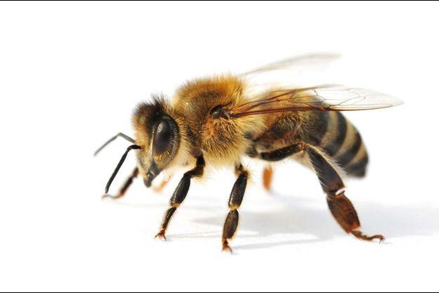 On produisait 32 000 tonnes de miel en 1997 contre moins de 15 000 en 2018.
