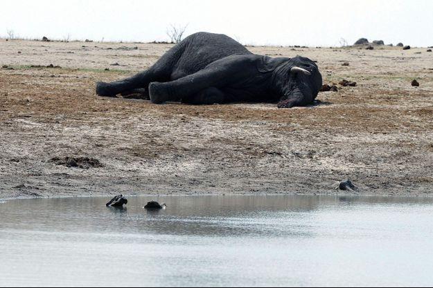 Un éléphant jonche le sol au Zimbabwe