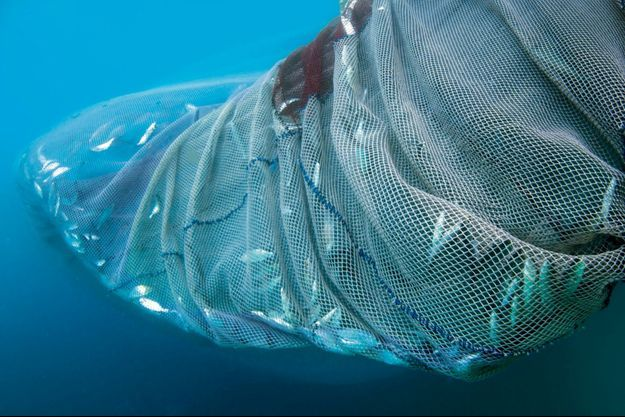 La surpêche vide la mer de ses poissons, la transformant peu à peu en un désert liquide.