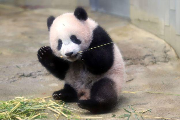 Xiang Xiang, bébé panda femelle du zoo d'Ueno à Tokyo.