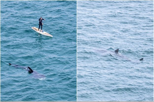 Le paddle et les requins.