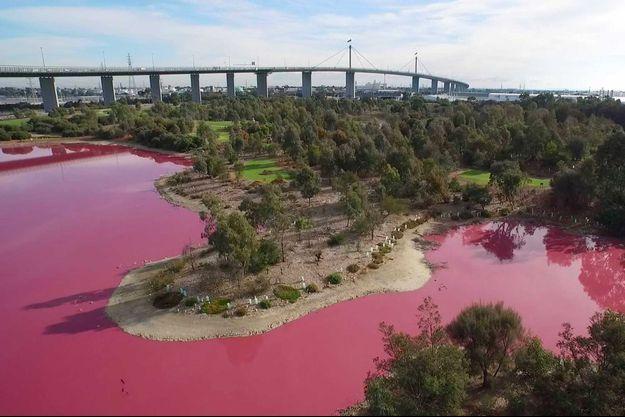 Le lac du Westgate Park de Melbourne est devenu rose.