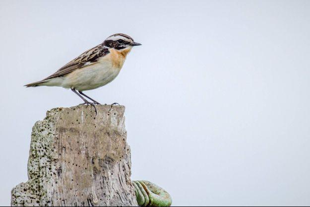 Extrait du documentaire « Vers un monde sans oiseaux »