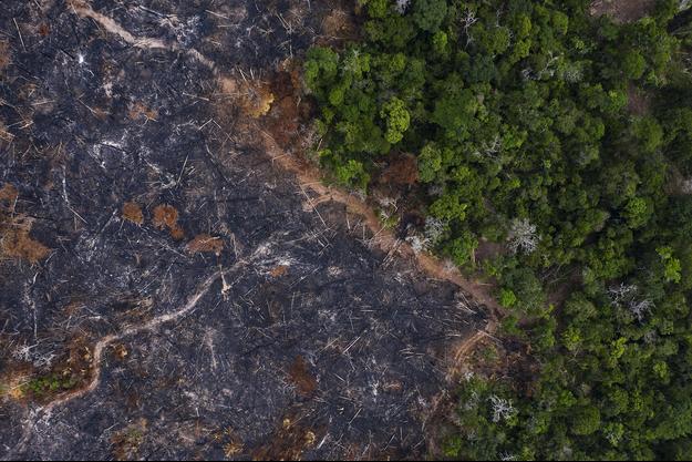 La forêt amazonienne détruite d'un côté, préservée de l'autre.