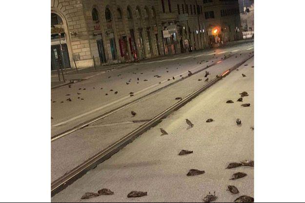 Des centaines d'étourneaux morts à Rome la nuit du Nouvel an.