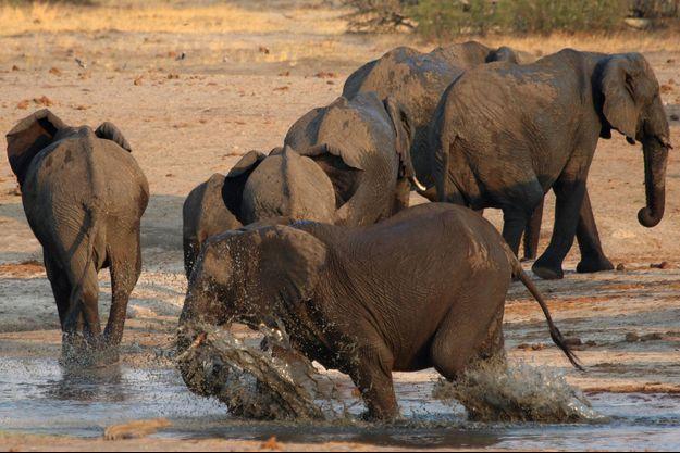 Photo d'illustration prise au Zimbabwe.