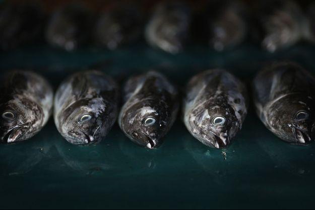 Pour survivre les naufragés ont mangé du poisson cru (Image d'illustration)