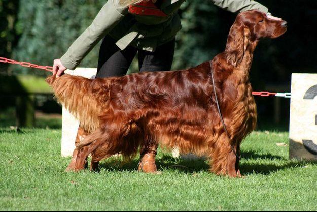 Jagger, le chien empoisonné.