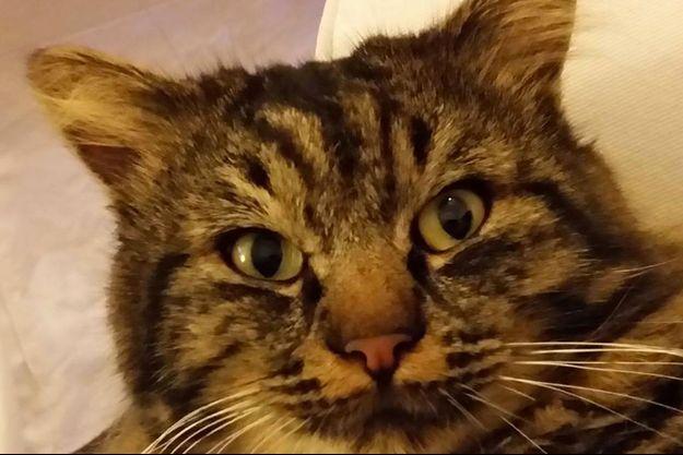 Haribo le chat a disparu depuis le 10 juillet dernier.